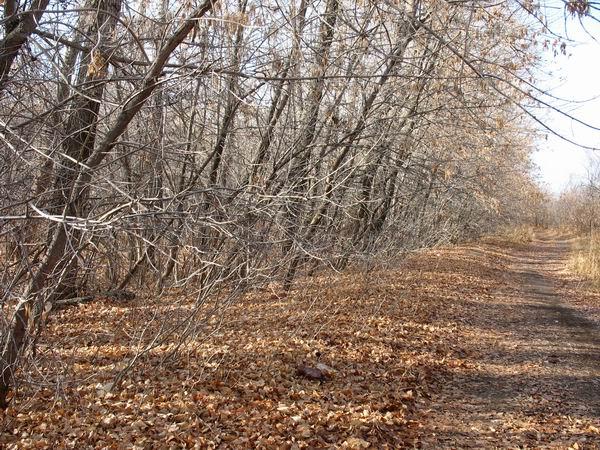 Серый лес (19 ноября )