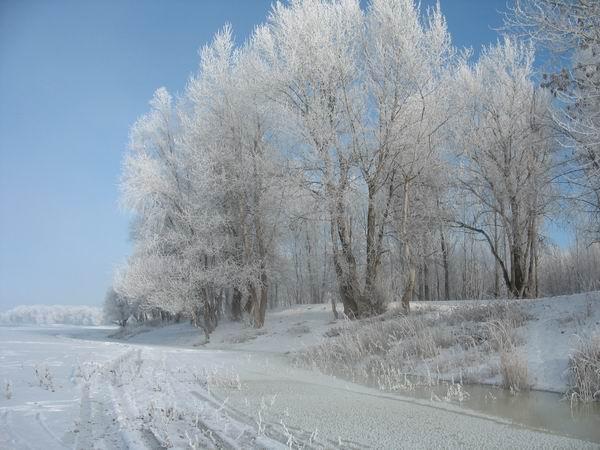 №6 Зима (7 января 09)