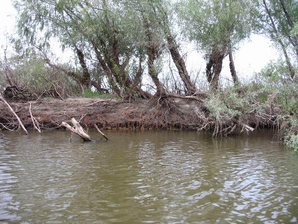 Напротив поваленного дерева в центральной части острова