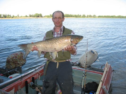 Большие рыбы большой реки